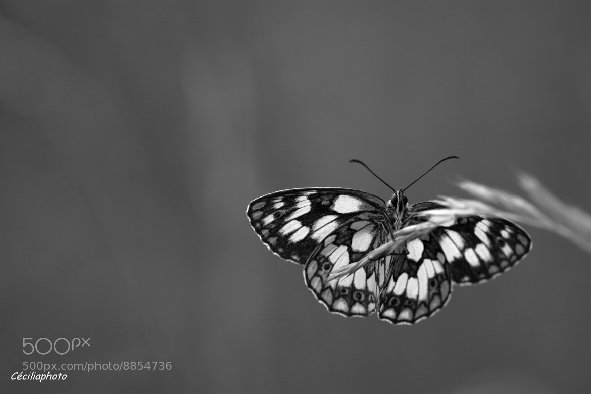 Photograph Black 'n White  by Cécilia Photo on 500px