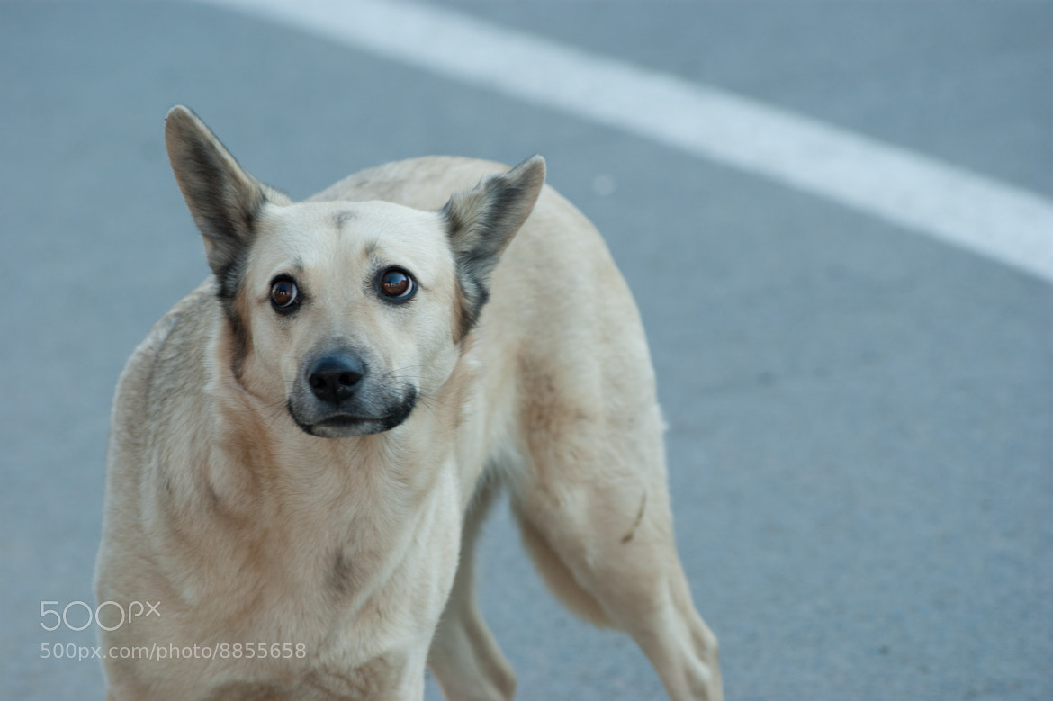 Photograph Dog))) by Sergey Suhanov on 500px
