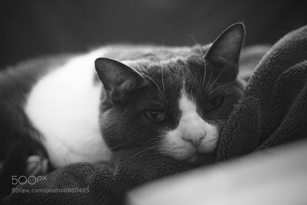 Photograph Niles by Timmy Marsee on 500px