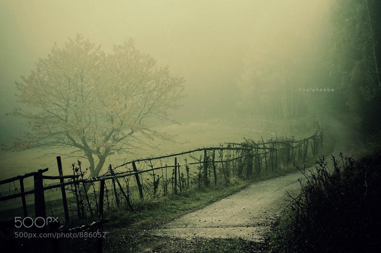 Photograph foggy by Roberta Fuganti on 500px