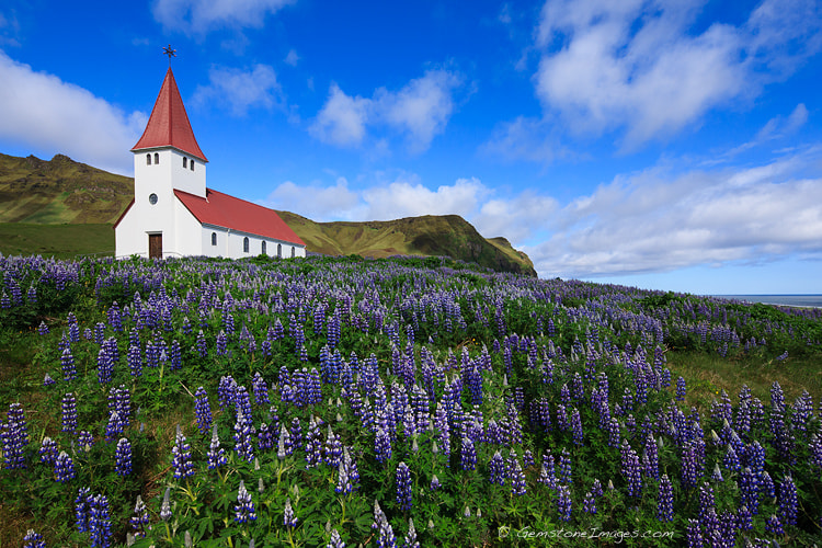 Photograph Church with lupines, Vik, Iceland by Scott Dimond on 500px