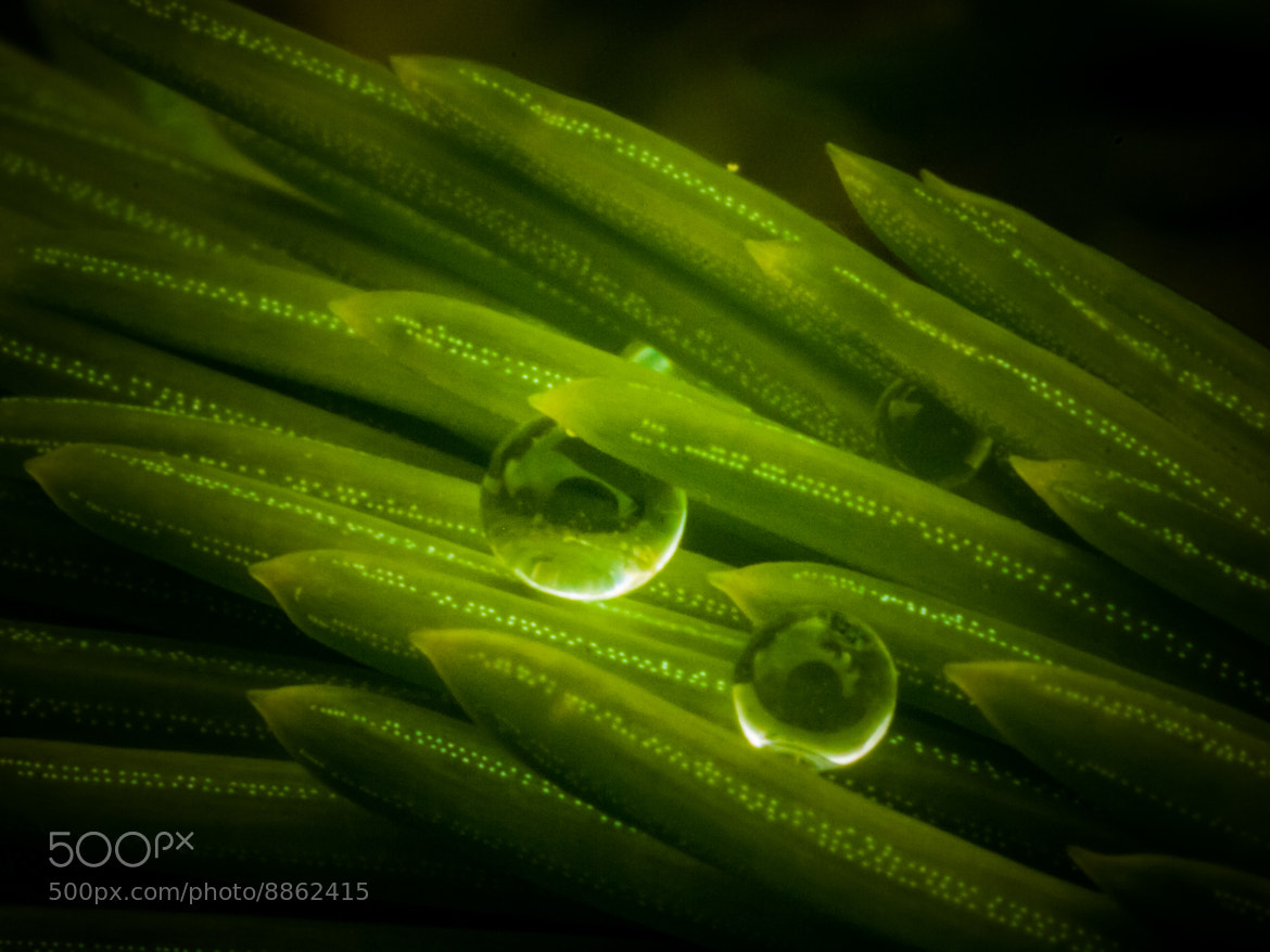 Photograph Drops of Life by Simone Corsi on 500px