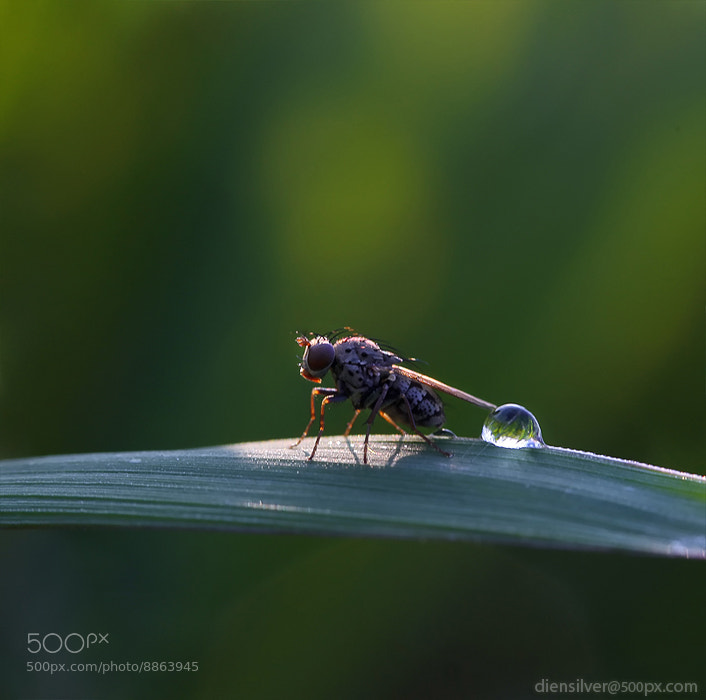 Photograph Lazy fly by Diens Silver on 500px