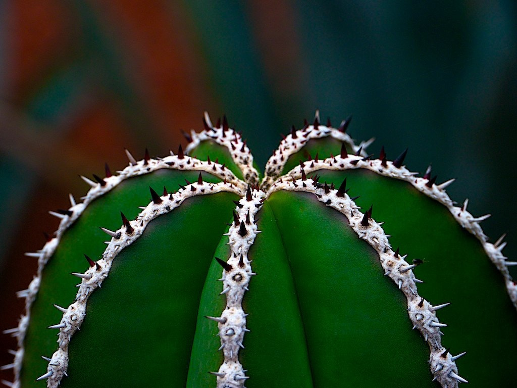 Photograph Nature's Crown Theory by Felipe Carral on 500px