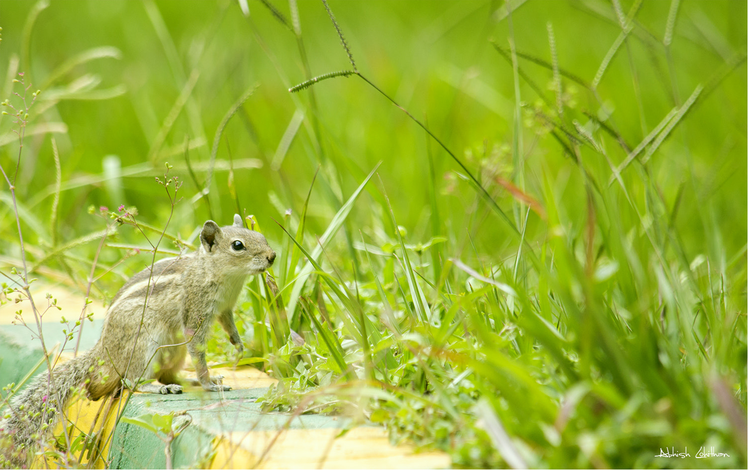 Photograph Scrat  by Abhish Lohithan on 500px