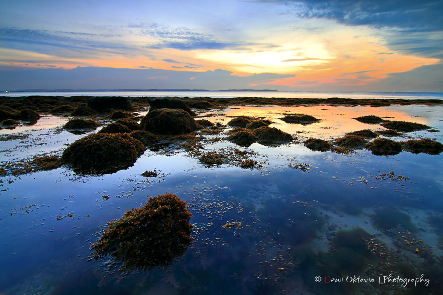Photograph a shade of blue by Dewi Oktavia on 500px