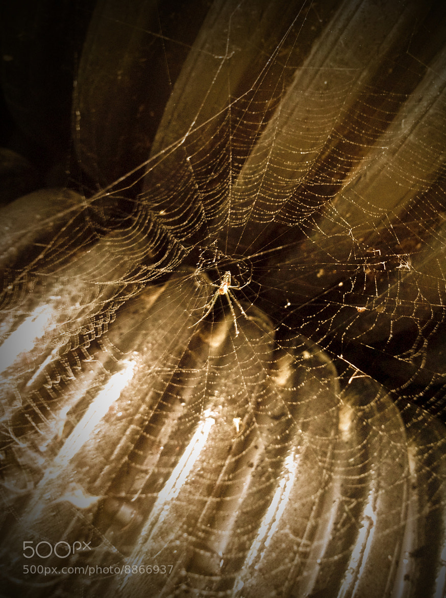 Photograph Web of lies by Alf Baptist on 500px