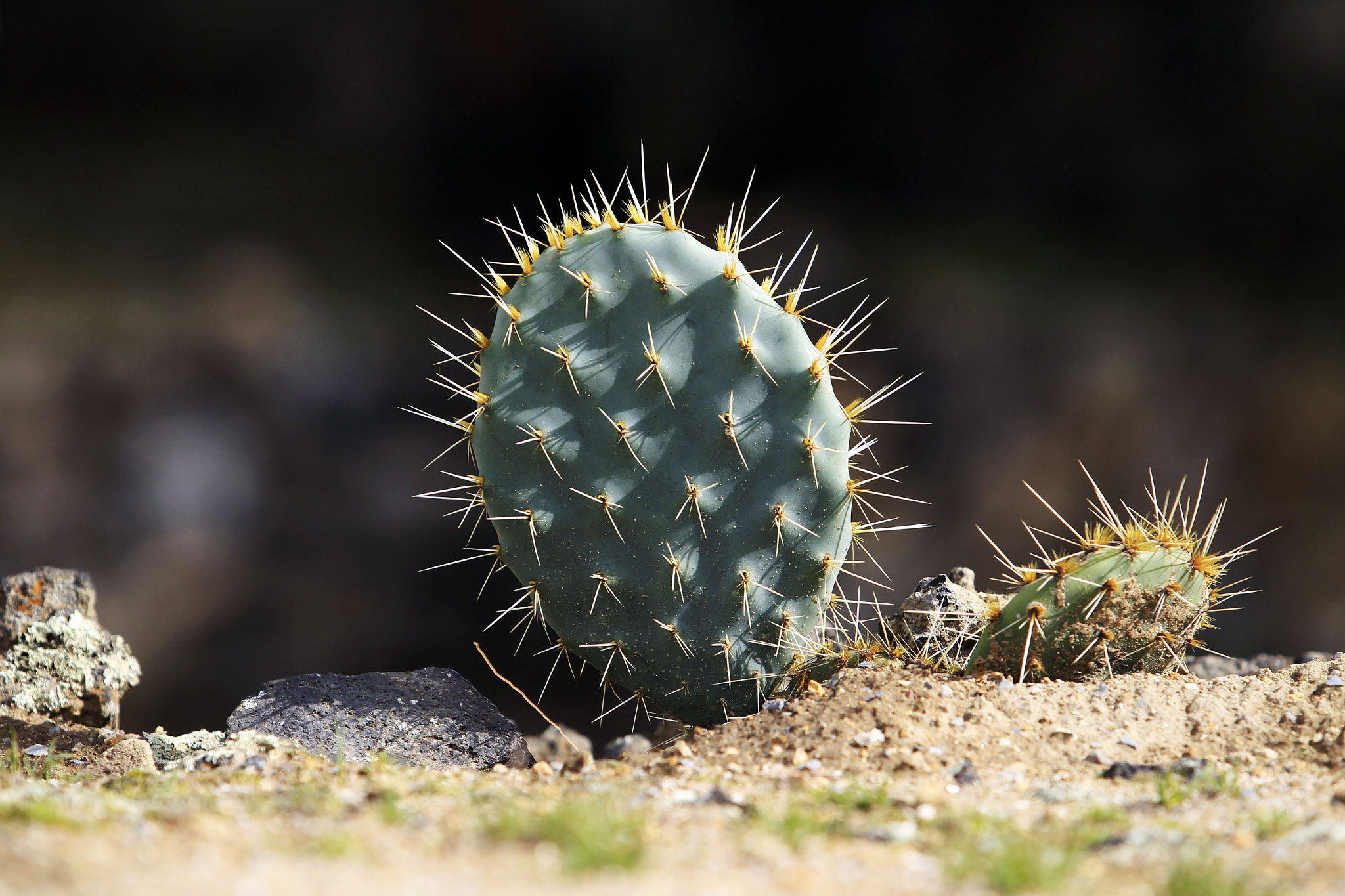 Photograph Special Cactus by Cristobal Garciaferro Rubio on 500px