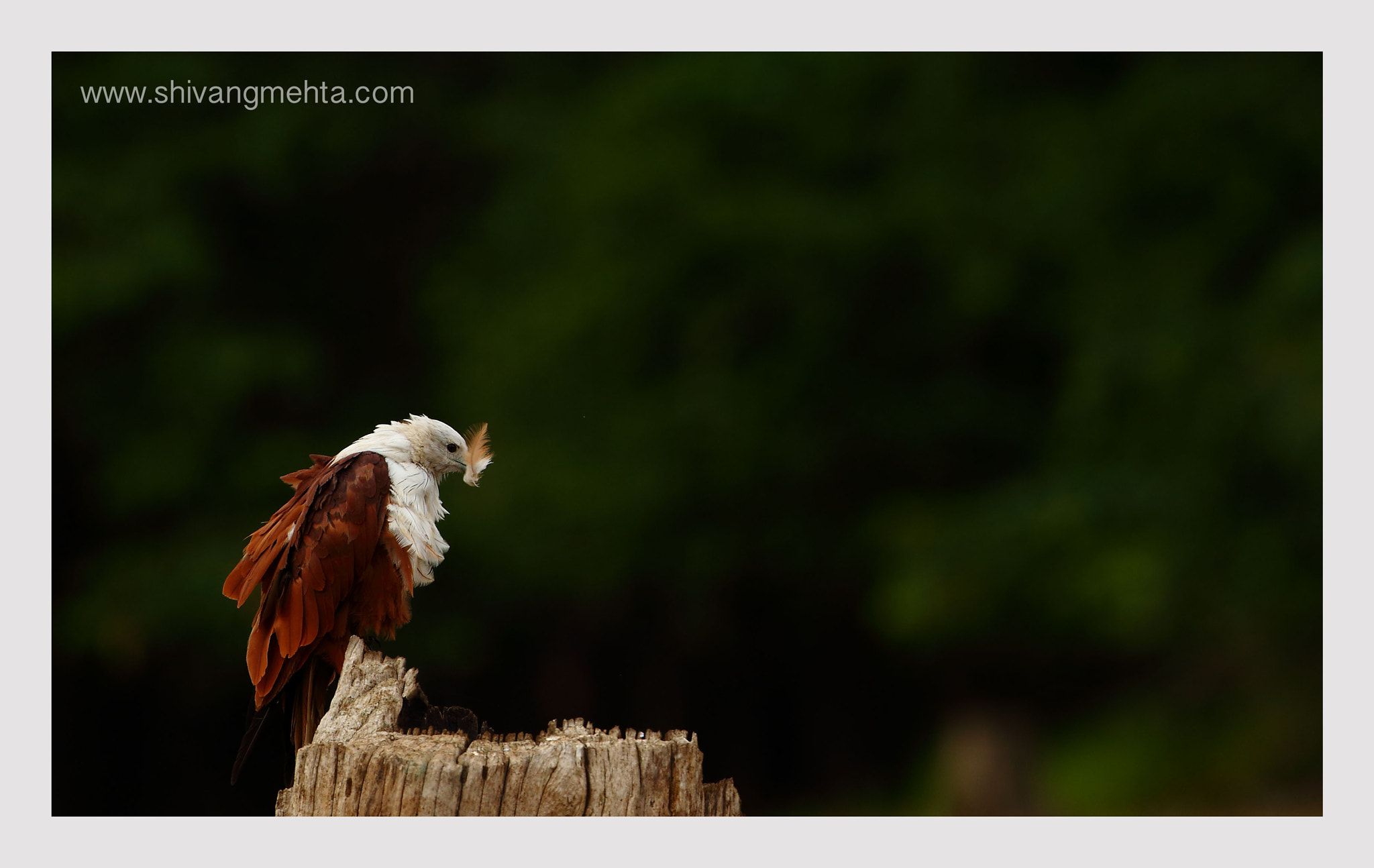 Photograph I lost a feather... by Shivang Mehta on 500px