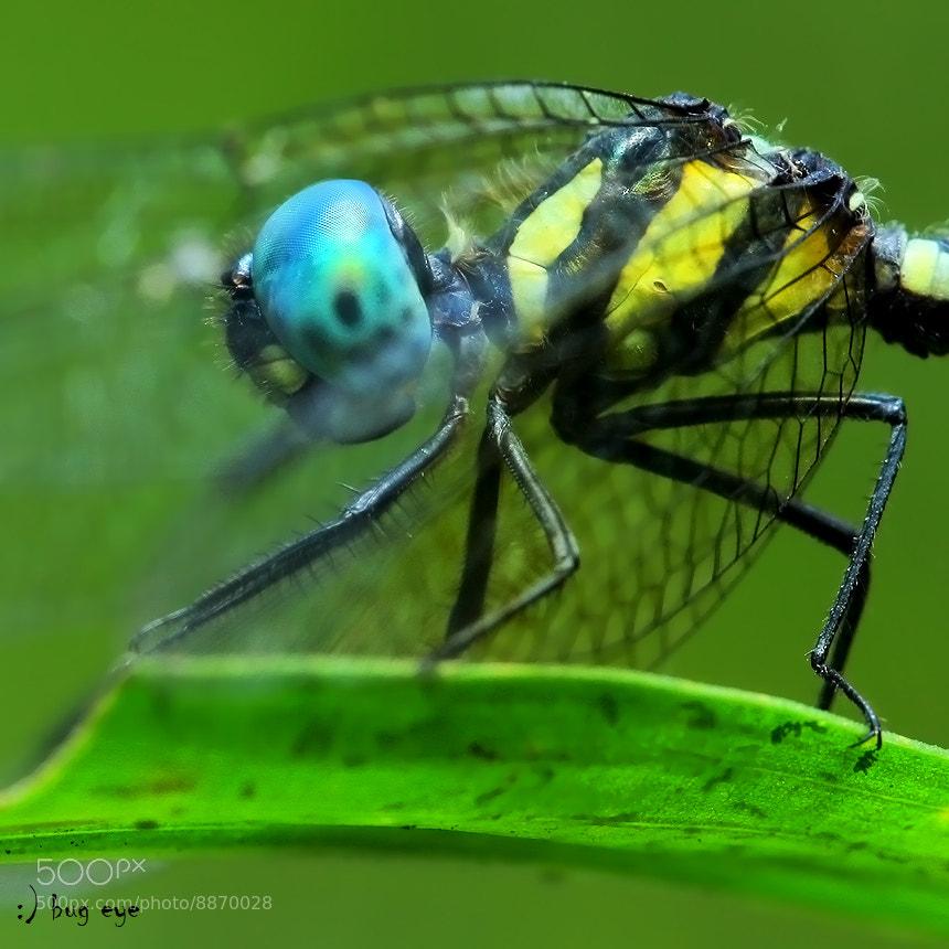 Photograph hidden eyes by bug eye :) on 500px