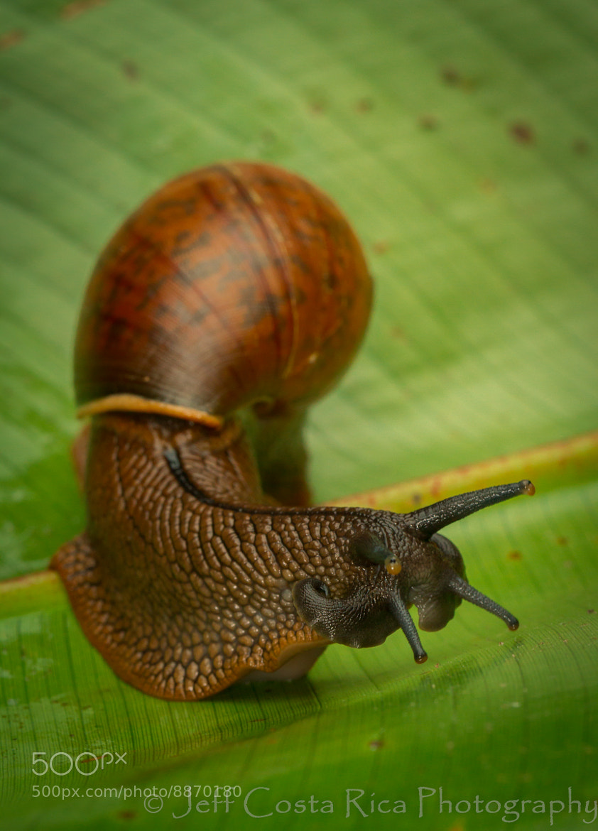 Photograph Snail 4 by Jeffrey Muñoz on 500px