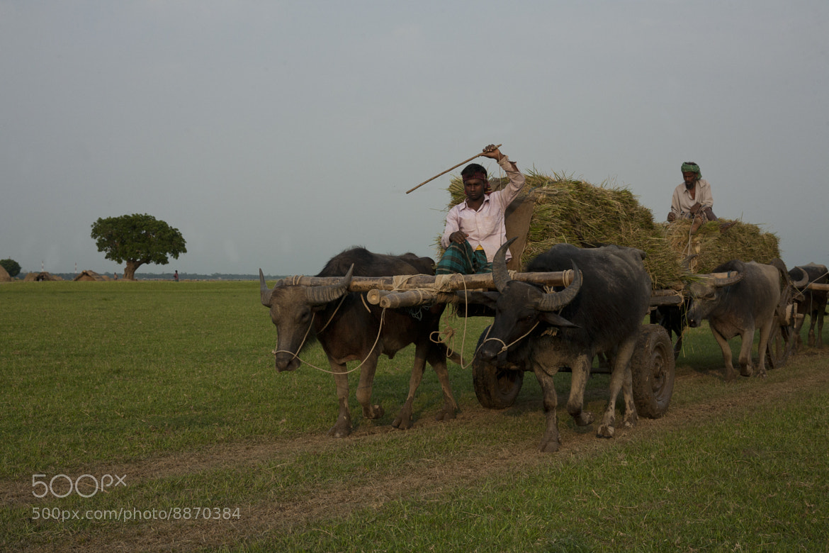 Photograph Carrying Corn by Sayem Ahmed Chowdhury on 500px