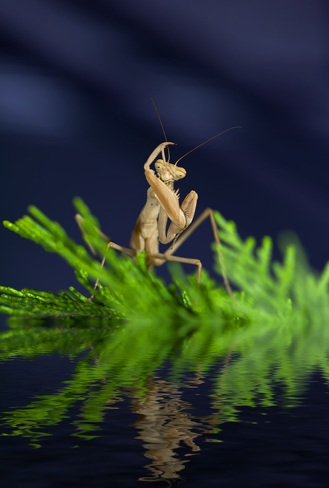 Photograph Mantis 9 by iman mehr on 500px