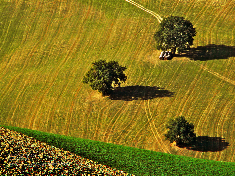 Photograph Three trees by Domenico VITTORIO on 500px