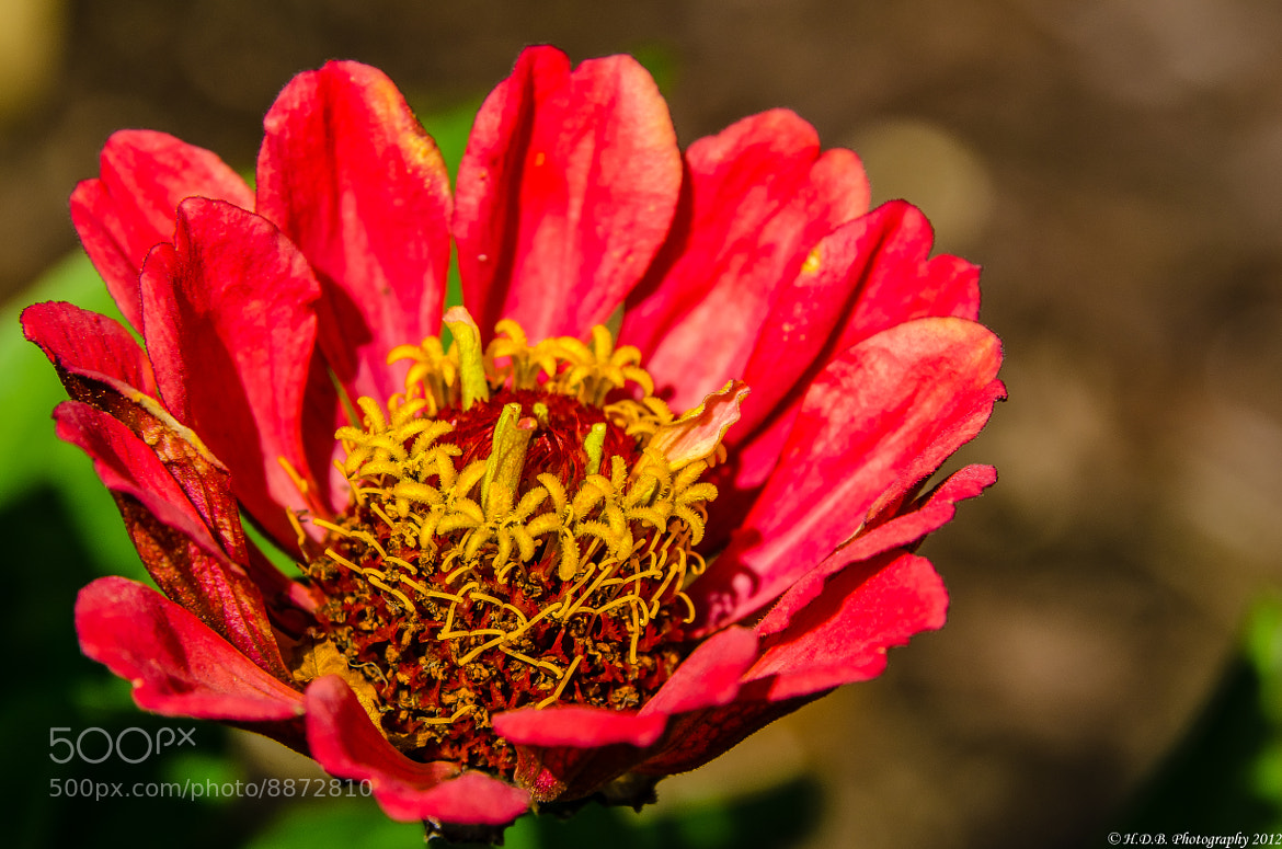 Photograph Just A Flower by Harold Begun on 500px
