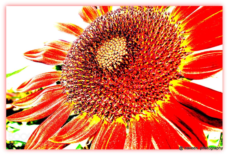Photograph Loving SUN by naveen sharma on 500px