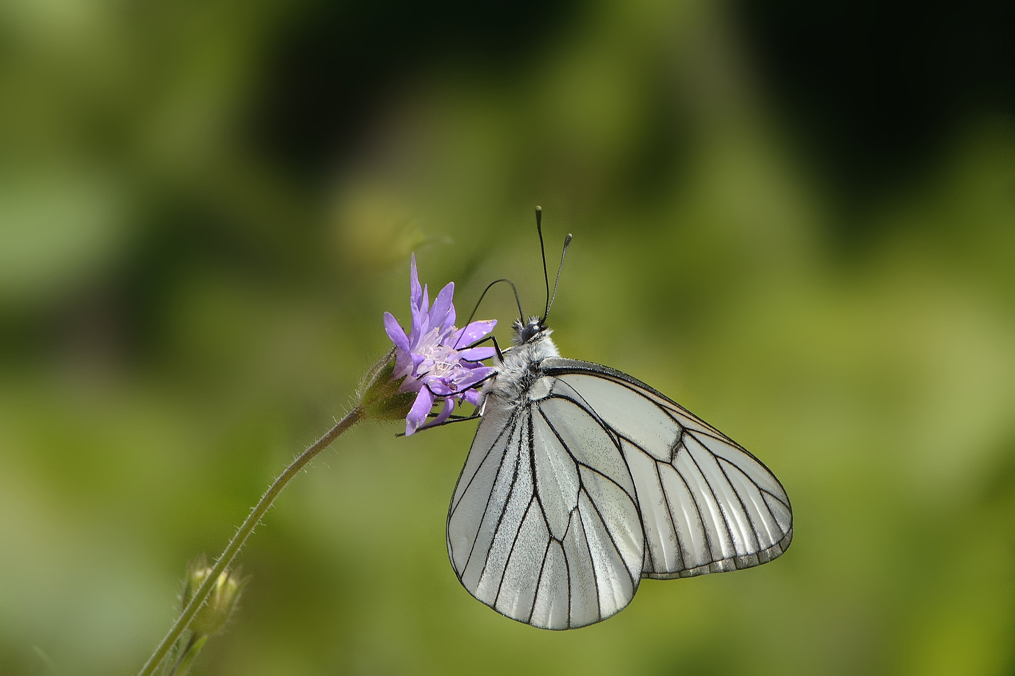 Photograph White butterfly by Ismail Tozan on 500px