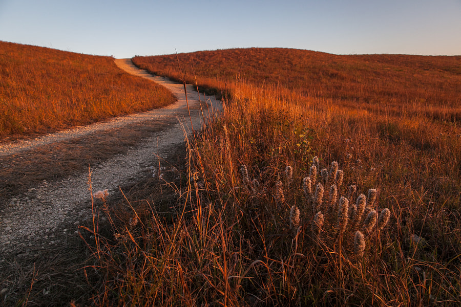 Prairie Gold by James Staddon on 500px.com