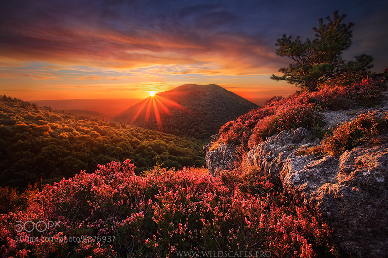 Photograph The Unforgettable Wilderness by Maxime Courty on 500px