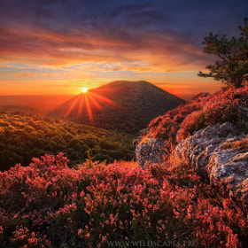 The Unforgettable Wilderness by Maxime Courty (maximecourty)) on 500px.com