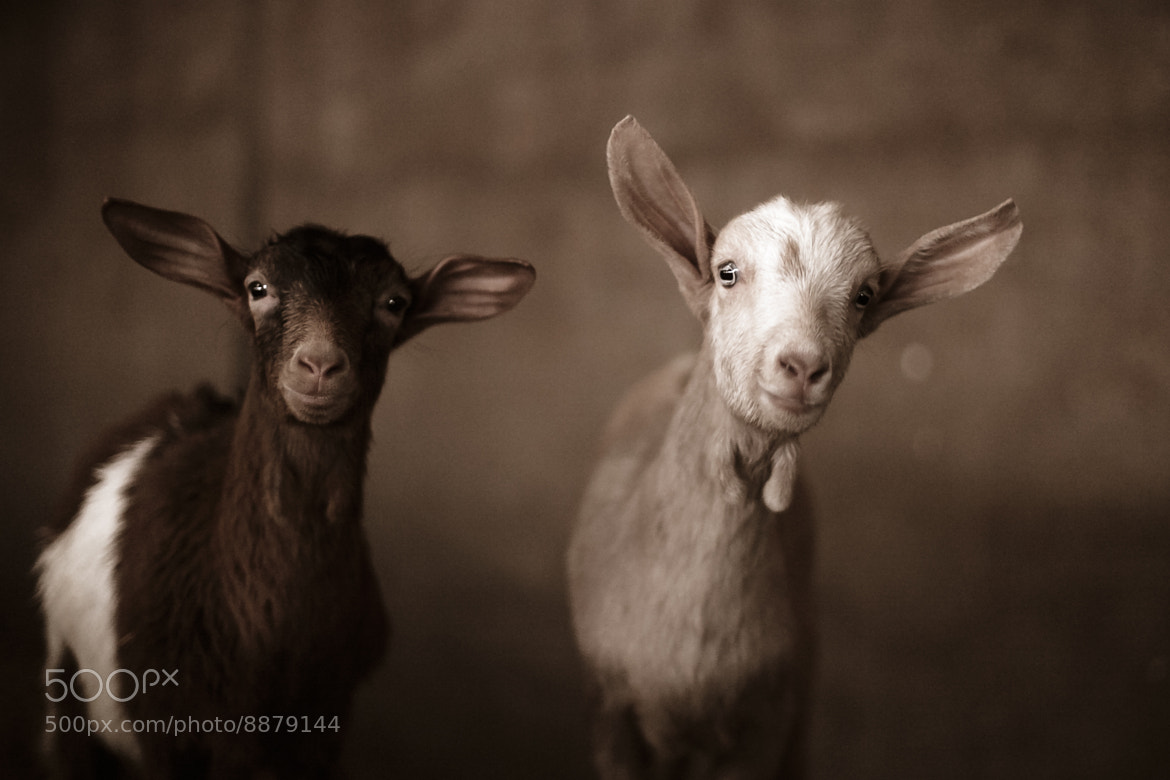 Photograph INNOCENT by Carlos  Rodríguez Photographer on 500px