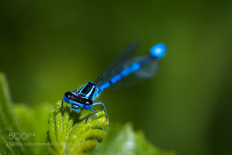 Photograph Blue eyes by Thorsten Scheel on 500px