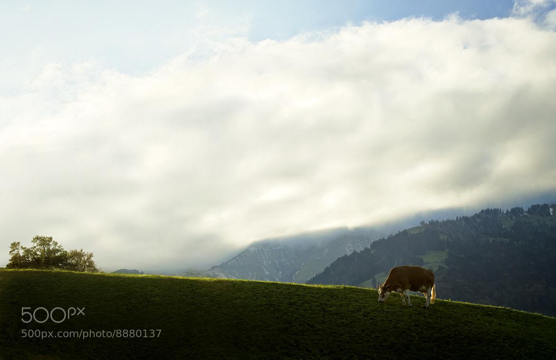 Photograph Schweiz by Emil Eriksson on 500px