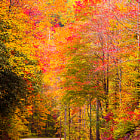 ������, ������: Picture Perfect Fall Foliage @ Great Smoky Mountains National
