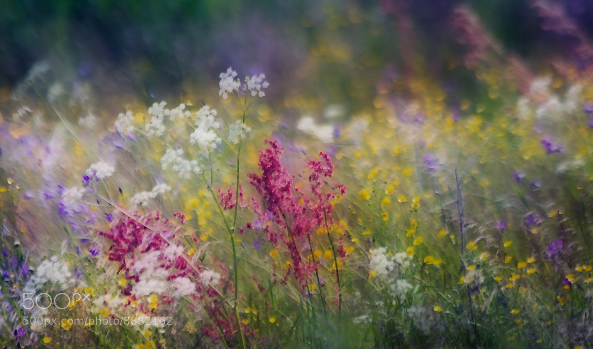 Photograph Stormy Meadow by Pia Parkkonen on 500px