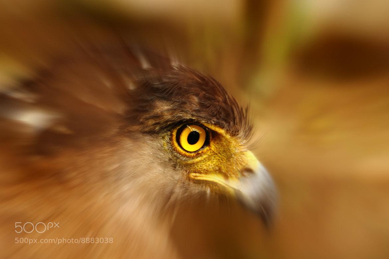 Photograph Eagle eye by Mritunjay Kumar on 500px