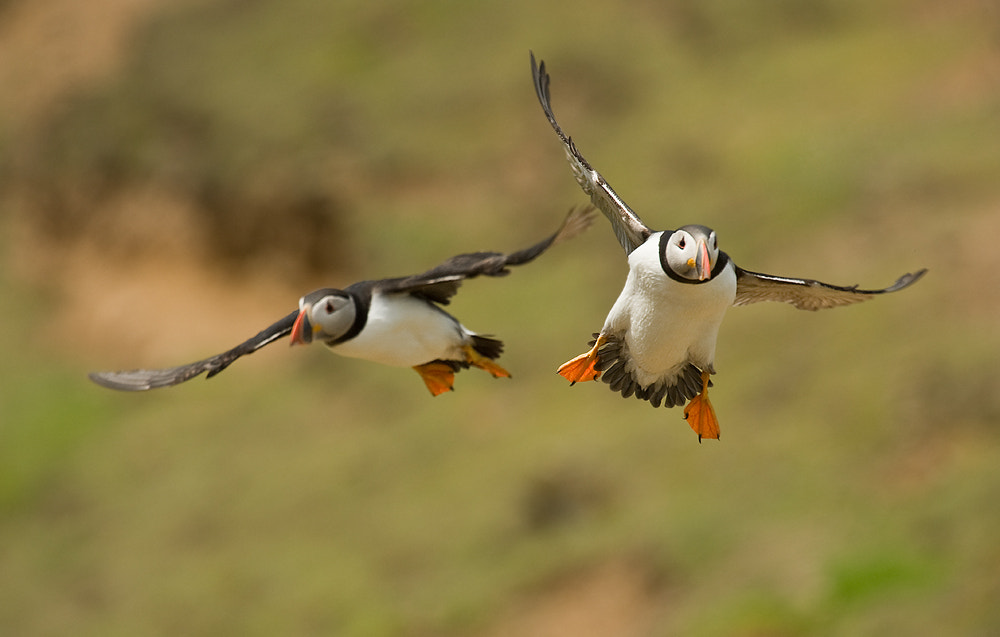 Photograph Seeing double by Geoffrey Baker on 500px