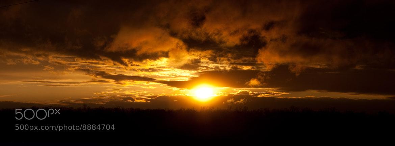 Photograph Golden Light  by Brad Denny on 500px
