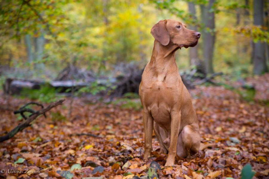autumn and dog