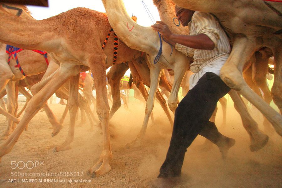 Photograph Camel-Man Race by Abdulmajeed  Aljuhani on 500px