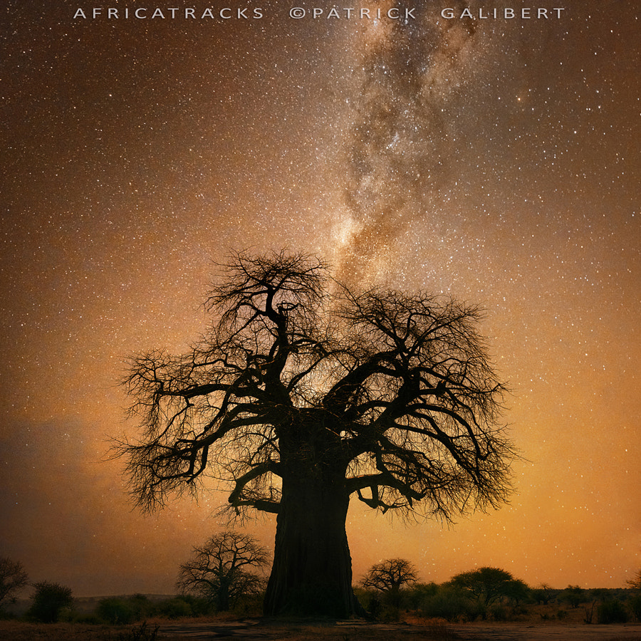 Photograph Baobab and milky way, Botswana by Patrick Galibert on 500px