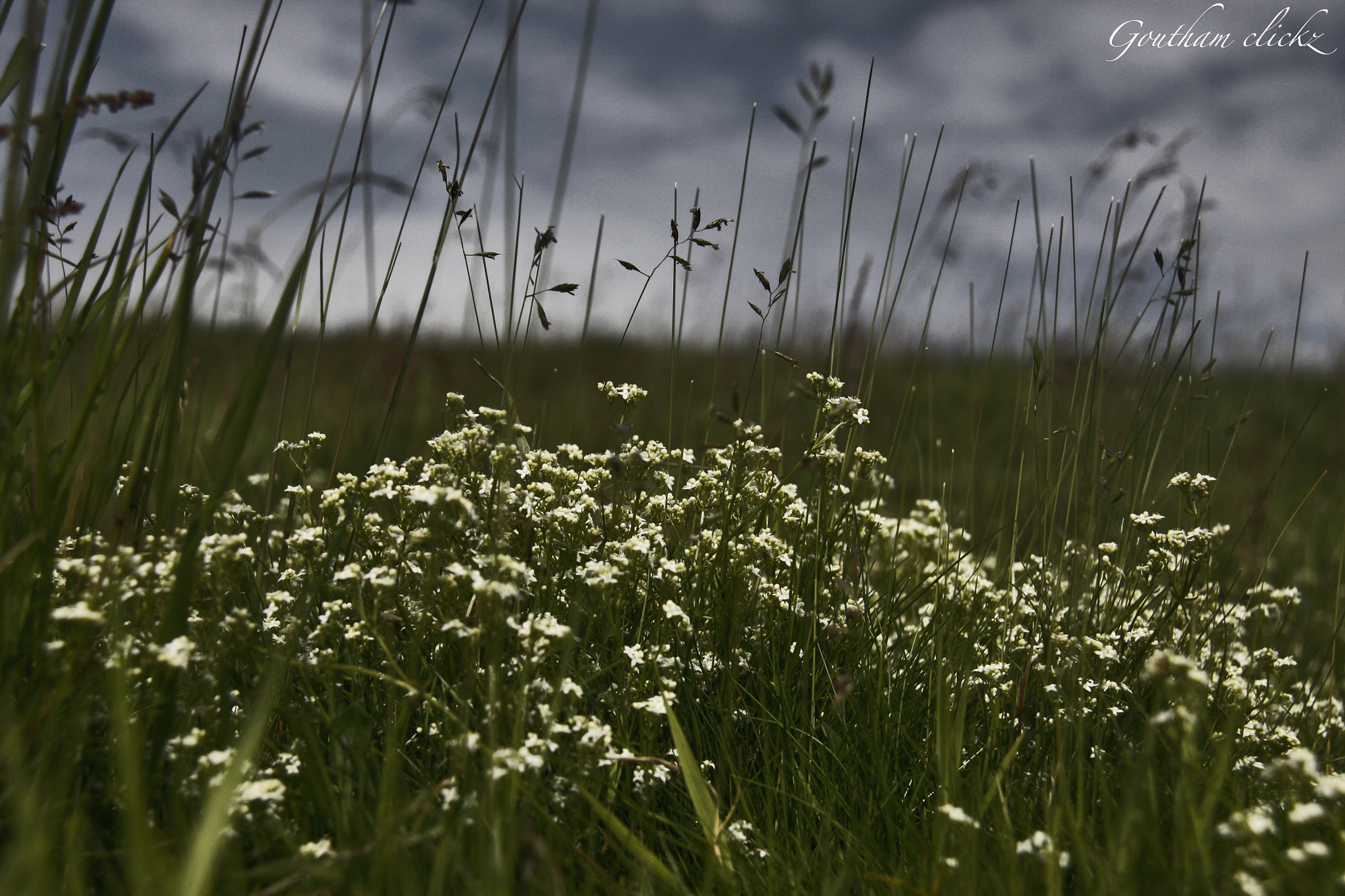 Photograph Tiny flowers under d dark clouds by Goutham Raj on 500px