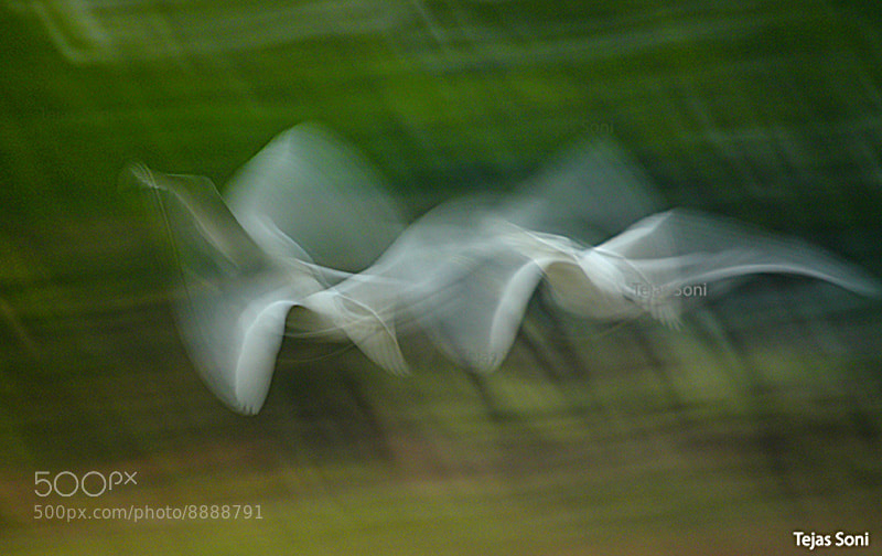 Photograph flying farieis by Tejas Soni on 500px