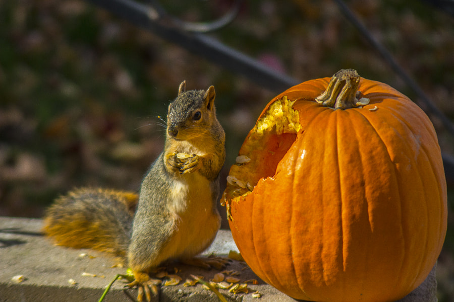 The Pumpkin Thief by Jeff Carter on 500px.com
