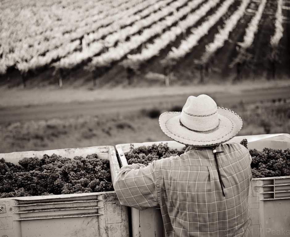 Photograph Harvest view by Duane Hall on 500px