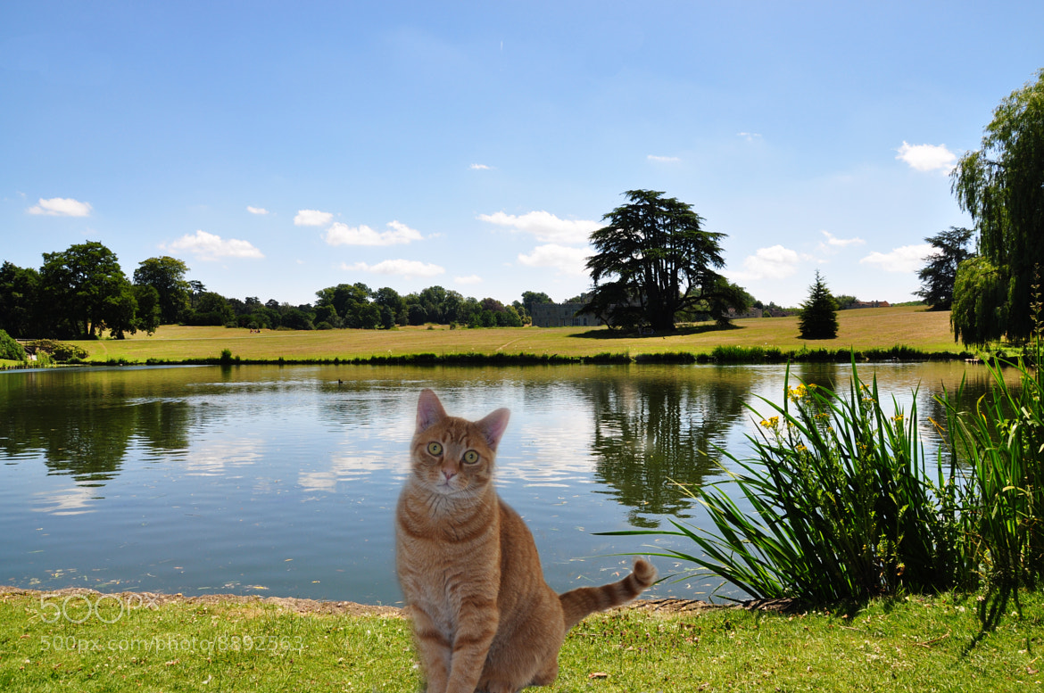 Photograph Cat in the park by Marco Dall'Omo on 500px