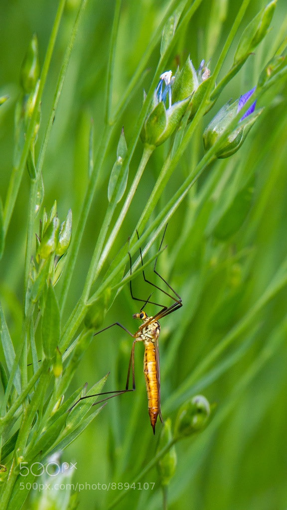 Photograph Bugs amongst the flax by Martin Cook on 500px