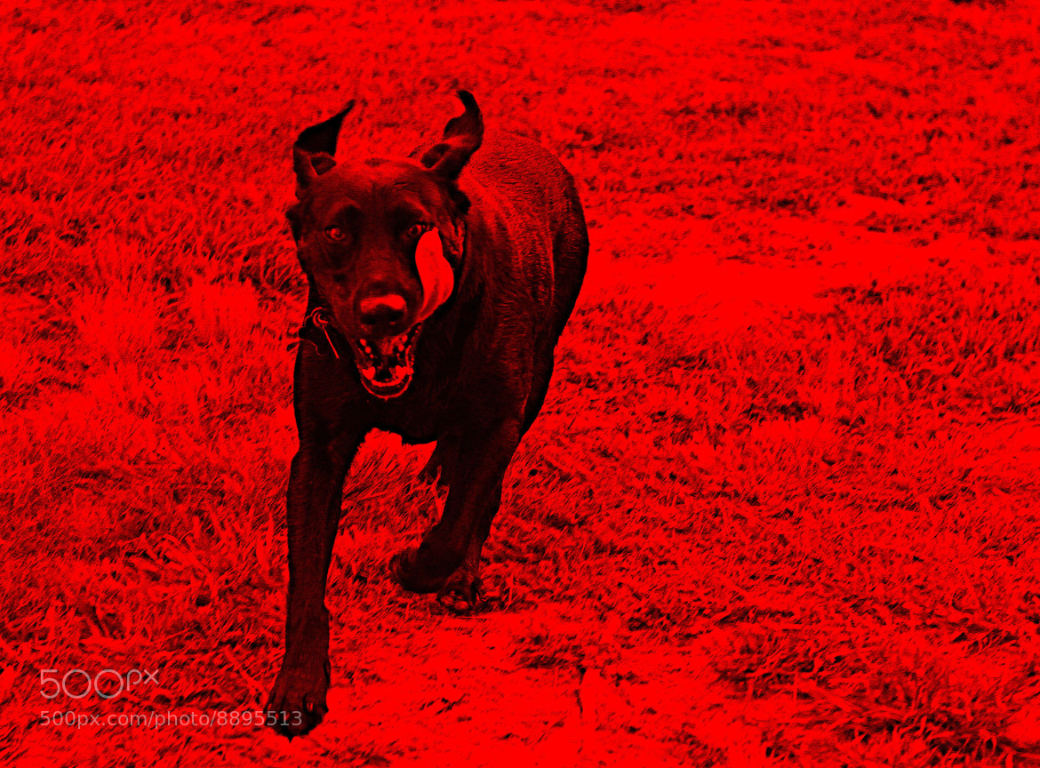 Photograph The Cerberus as Evil by Jim Lawrence on 500px