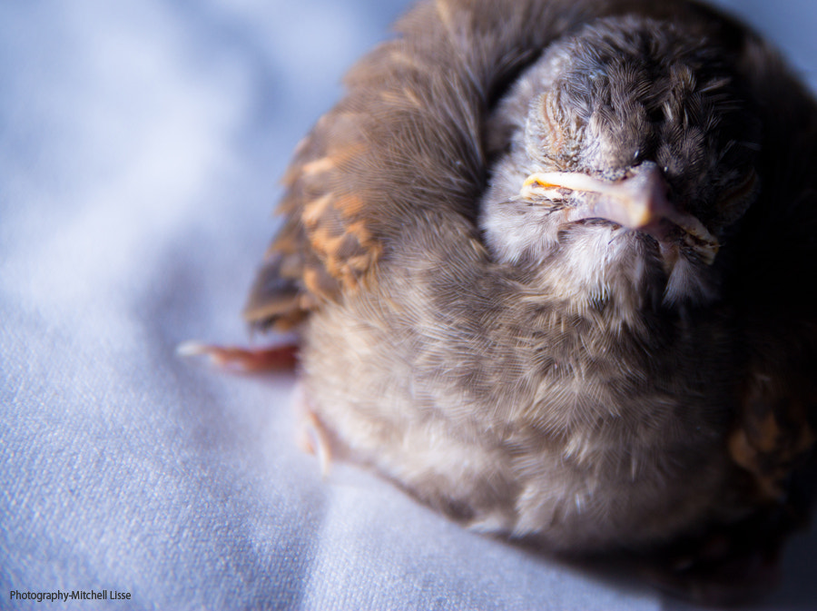 Photograph The almost dying bird by Mitchell  Lisse on 500px
