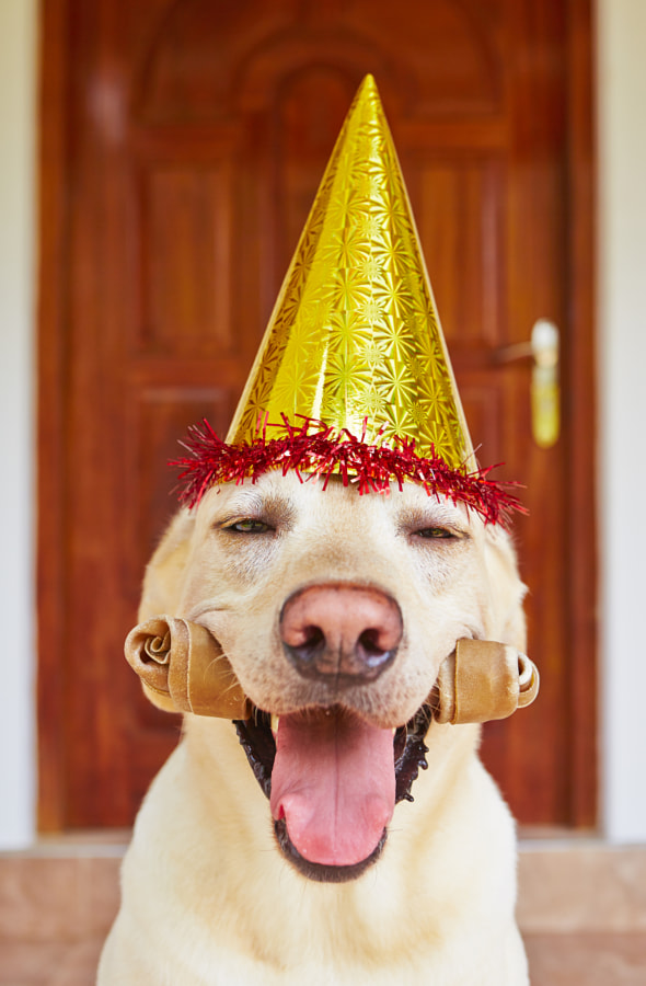 Photograph Dog birthday party by Jaromír Chalabala on 500px