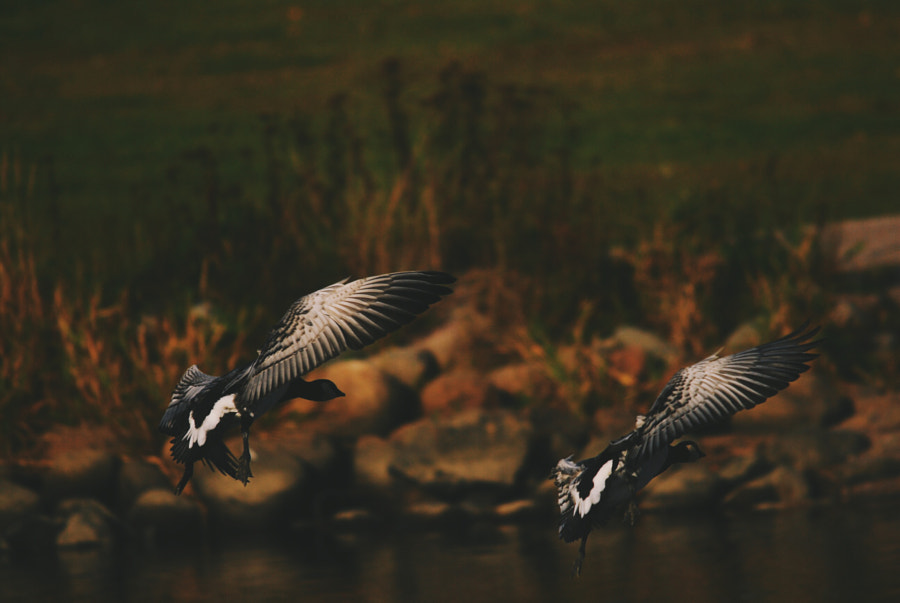 Photograph Tandem by Jere Ketola on 500px