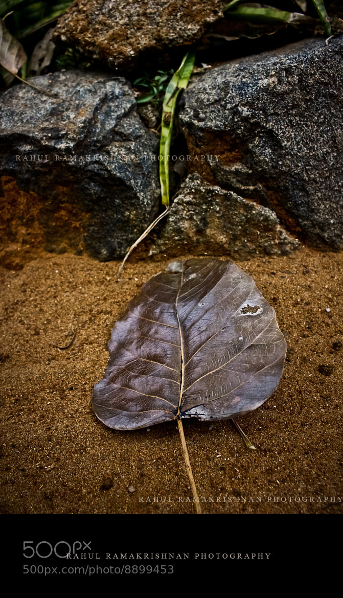 Photograph Leaf by Rahul Ramakrishnan on 500px