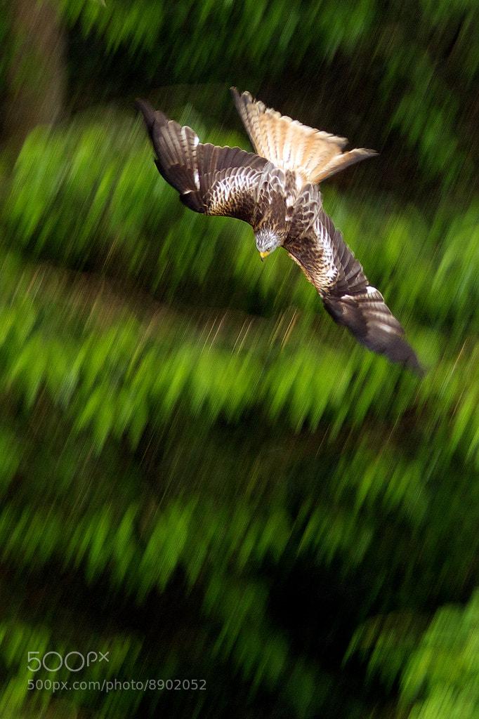 Photograph dive dive dive! by Mark Bridger on 500px