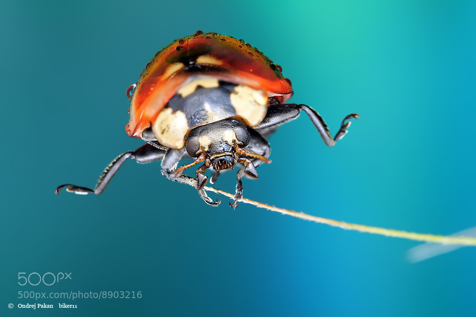 Photograph Jumper by Ondrej Pakan on 500px
