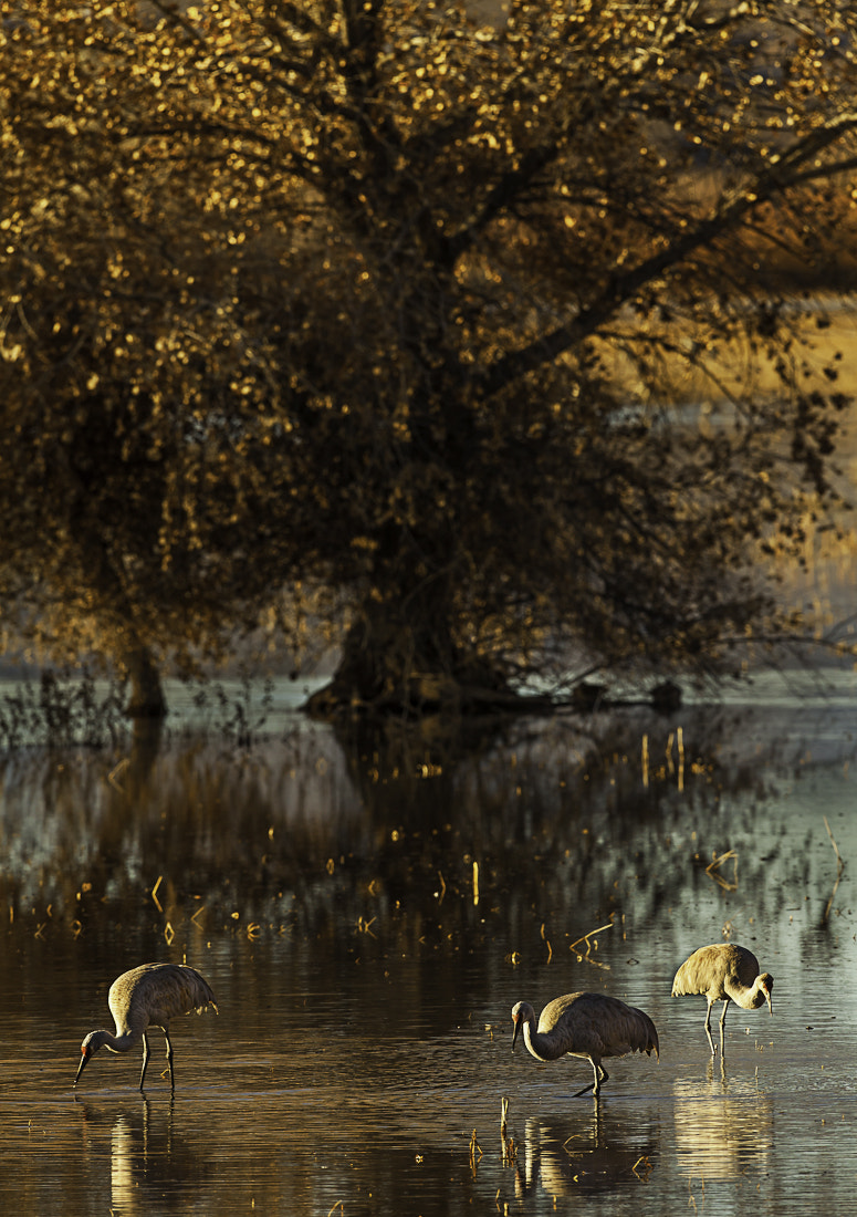 Photograph Three by the Tree by Jerry Fleury on 500px