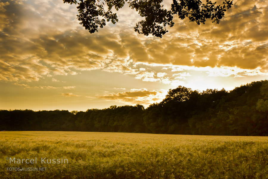 Photograph Cloudfield by Marcel K on 500px